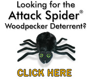 The Attack Spider
